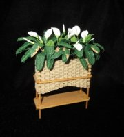 Calla Lillies in Wicker Planter