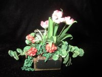 Geraniums and Tulips in small trunk