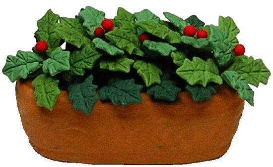 Holly in Clay Planter